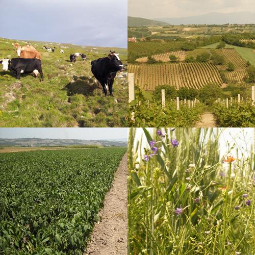 Agriculture kosovo